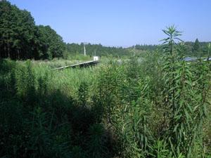 太陽光発電施設の草刈りの年間契約:草刈り前01