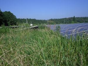 太陽光発電施設の草刈りの年間契約:草刈り前05