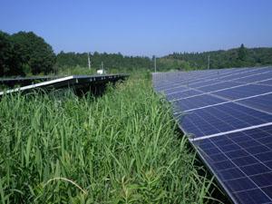 太陽光発電施設の草刈りの年間契約:草刈り前04