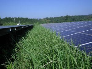太陽光発電施設の草刈りの年間契約:草刈り前03