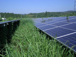 太陽光発電施設の草刈りの年間契約:草刈り前02