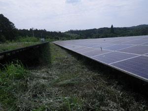 太陽光発電施設の草刈りの年間契約:草刈り後05