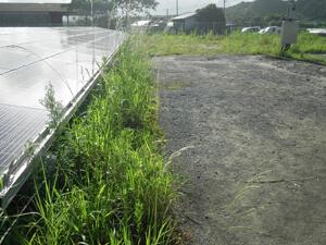 太陽光発電施設の草刈りの実例 草刈り前