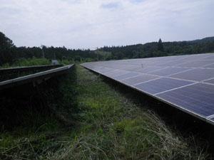 太陽光発電施設の草刈りの年間契約:草刈り後04