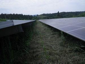 太陽光発電施設の草刈りの年間契約:草刈り後01