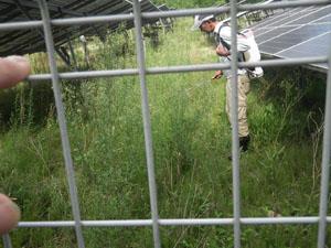 太陽光発電施設の草刈り 雑草処理01