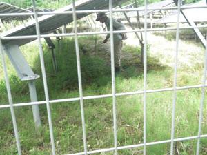 太陽光発電施設の草刈り 雑草処理02
