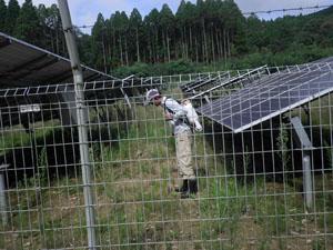 太陽光発電施設の草刈り 雑草処理04