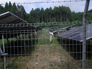 太陽光発電施設の草刈り 雑草処理05