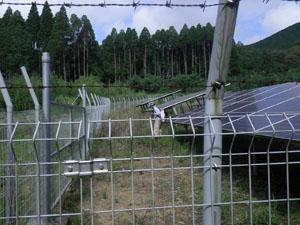 太陽光発電施設の草刈り 雑草処理06