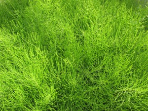 薩摩川内市 草刈り