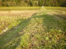 南九州市 草刈り