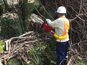 裏山 木 伐採