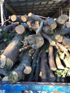 木の処分 参考