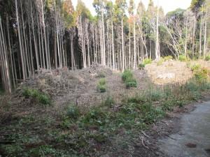 鹿児島 伐採