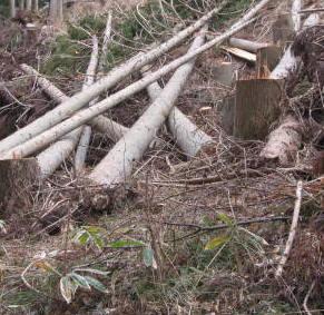 いちき串木野市 伐採