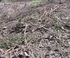 薩摩川内市 伐採