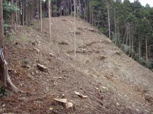 姶良市 伐採