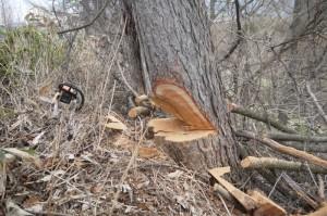 樹木 伐採 鹿児島