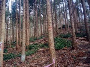 鹿児島 間伐