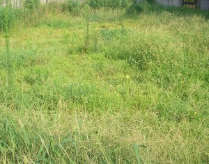 枕崎市 草刈り
