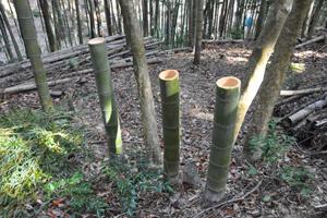 鹿児島 竹林 伐採