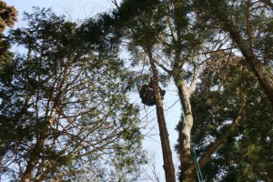 鹿児島 特殊伐採