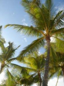 シュロ 伐採 鹿児島