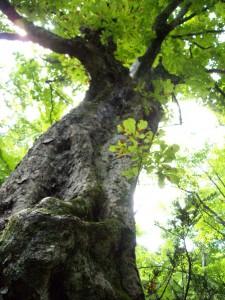 大木 伐採 鹿児島