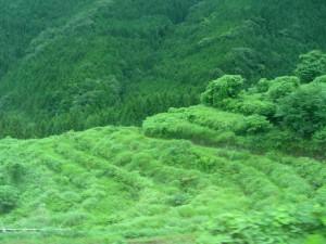鹿児島 耕作放棄地 雑草対策