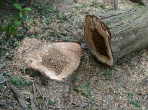 鹿児島 木伐採