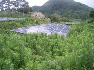雑草対策 施工前1