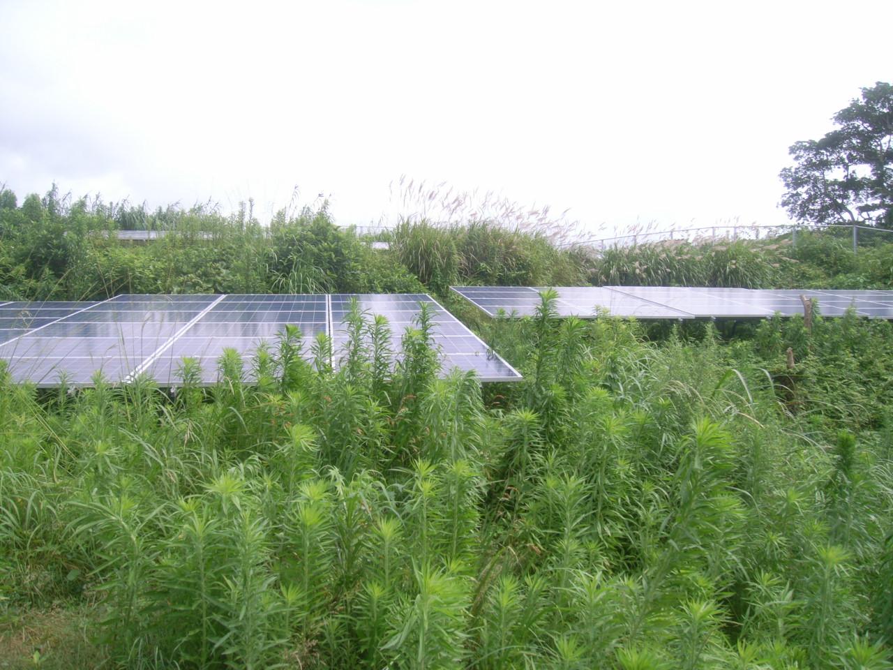 雑草対策 施工前2