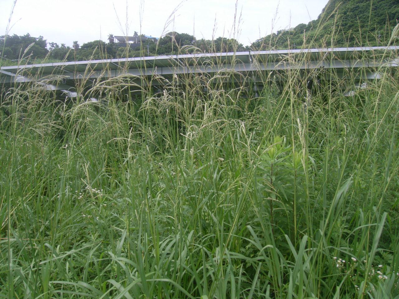雑草対策 施工前3
