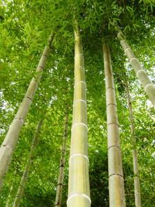 鹿児島 モウソウ竹 伐採