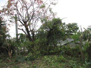 リフォーム駐車場:庭伐採4