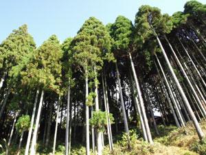 山林の造成について