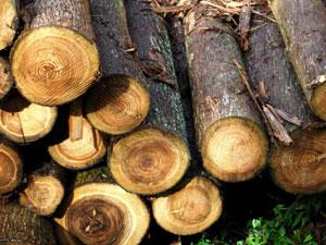 山林の伐採について