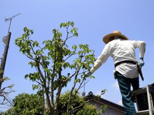 樹木の伐採について
