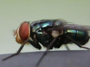 害虫と益虫について