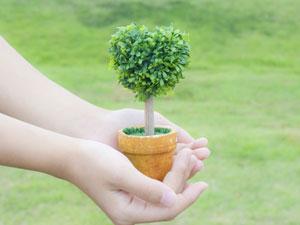 植栽作法について