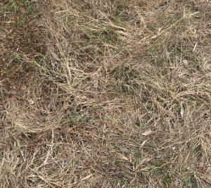 草刈り 除草