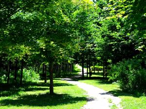 緑地の維持管理作業