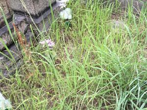 墓の雑草対策について