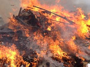 森林伐採で作業員の焚き火