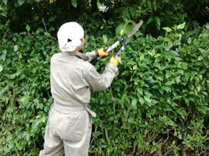 鹿児島県内の緑地管理は鹿児島工事発注ドットコム