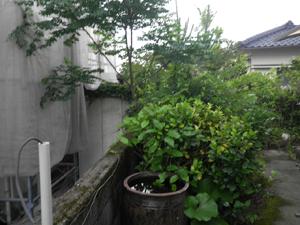 住宅庭の草刈り・剪定作業風景
