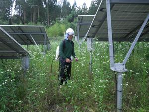 ソーラーシステム 除草作業