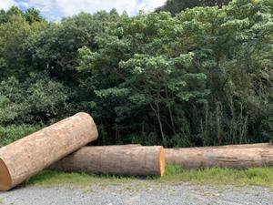 伐採した 山林の木