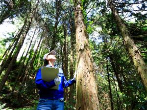 鹿児島 林業事業 参加